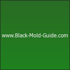 Information on the dangers of mold exposure. Symptoms of exposure to mold include respiratory problems, asthma attacks, hay fever-like symptoms, depression, rashes, fatigue ...........