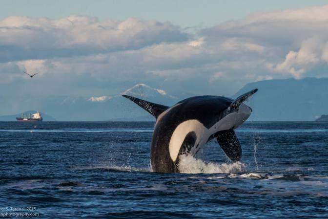 orca-5