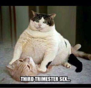 3rd trimester memes - Google Search