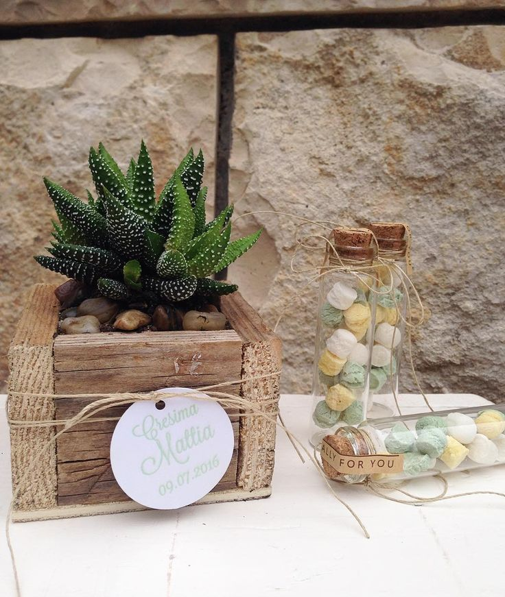 Bomboniera con pianta grassa, vaso in legno e caramelle in provetta! #bomboniera #piantagrassa #provetta #favor #succulent #woodenbox IG : okkinotturni