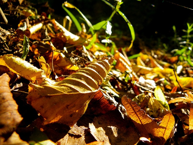 """""""(...) But I miss you most of all my darling when autumn leaves start to fall (...)"""", via Flickr."""