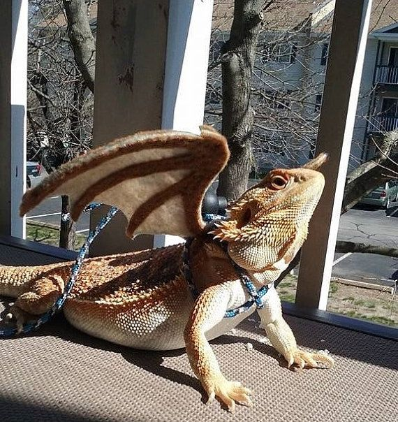 Bearded Dragon Wings w/ leash pick your by MadamVastrasBoutique