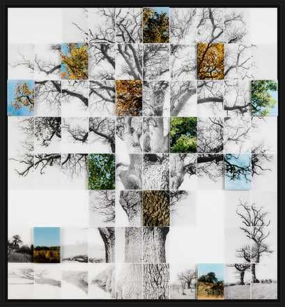 Noel Myles, Oak No 1, 2016 / 2016 © www.lumas.de/ #LumasArt Object,  Baum,  Bäume,  Fotografie,  Four Seasons,  Jahreszeiten,  Konzept,  Landschaft,  Mosaik,  Natur,  Objekt,  Schwarz-Weiß,  Wald