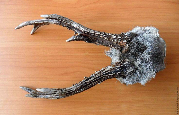 Купить Рога косули - бежевый, рога, рога оленя, рог, рог лося, рог оленя