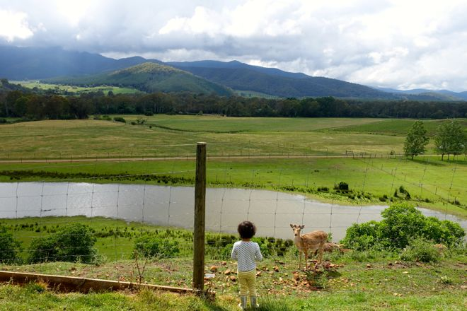 The view from Red Stag deer and emu farm in Myrtleford, one of the best free things to do in the Bright region of Australia. Find out more at http://www.suitcasesandstrollers.com/interviews/view/family-holidays-australia-bright-porepunkah?l=all #GoogleUs #suitcasesandstrollers #travel #travelwithkids #familytravel #familytraveltips #traveltips #vista #checkouttheview #contemplation #takingitallin #scenic