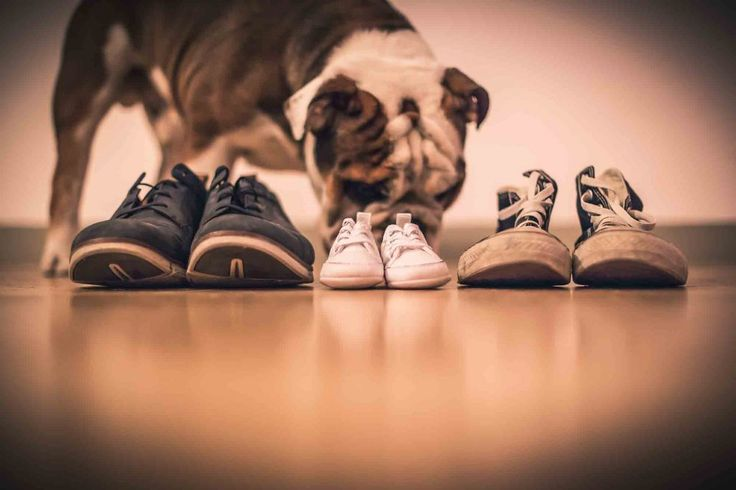 A Growing Family: Introducing Your Pet and New Baby | Animal Internal Medicine & Specialty Services |