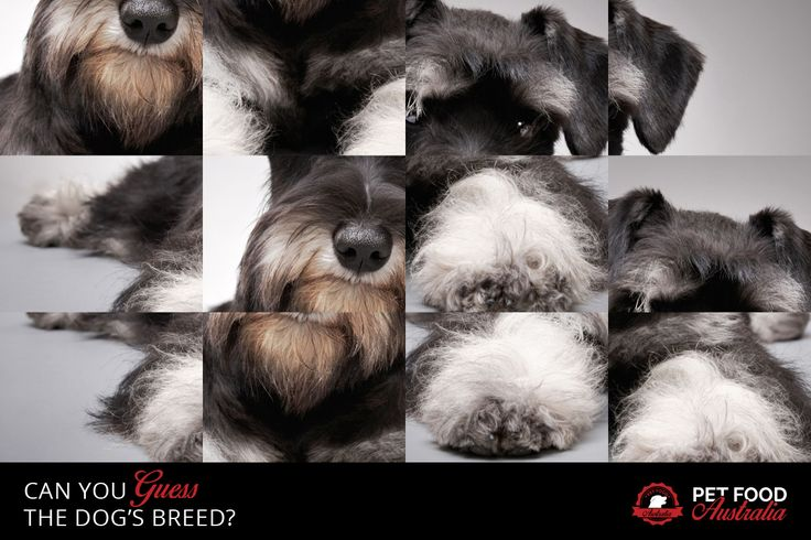 Guess the dog's breed? #dogbreeds