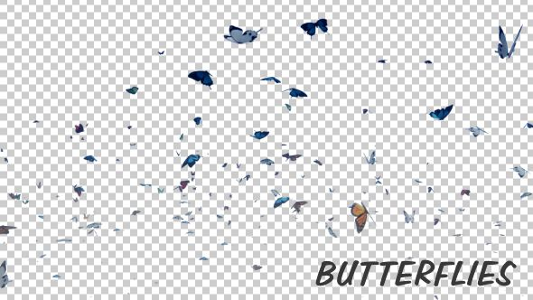 Butterfly    alpha, animation, butterflies, butterfly, flying, love, nature, particles, real, reveal, romantic, transparent, valentine`s day, wedding