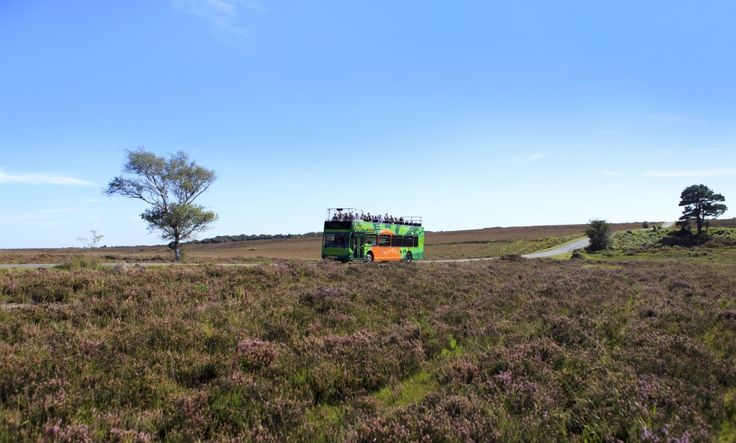 New Forest Tour   Homepage