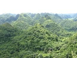 cat ba forest