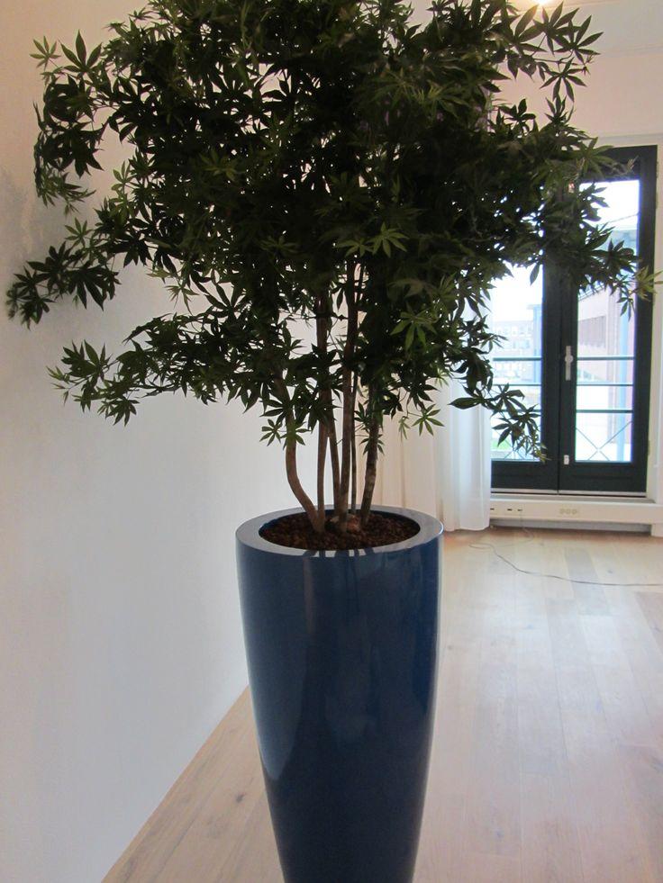 Een hoogglans blauwe pot van 100cm gevuld met een ...