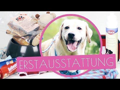 Anleitung Schnuffelteppich Hundespielzeug Selber Machen Basteln Hunde Diy Hund Youtube With Images Labrador Retriever Labrador Dogs
