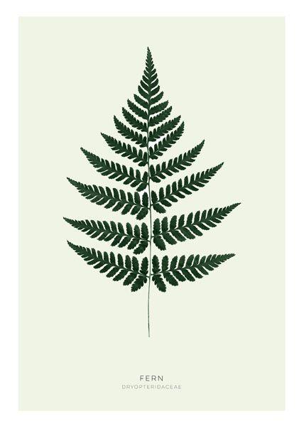 Affischer och posters till inredning | Botaniska prints med ormbunke