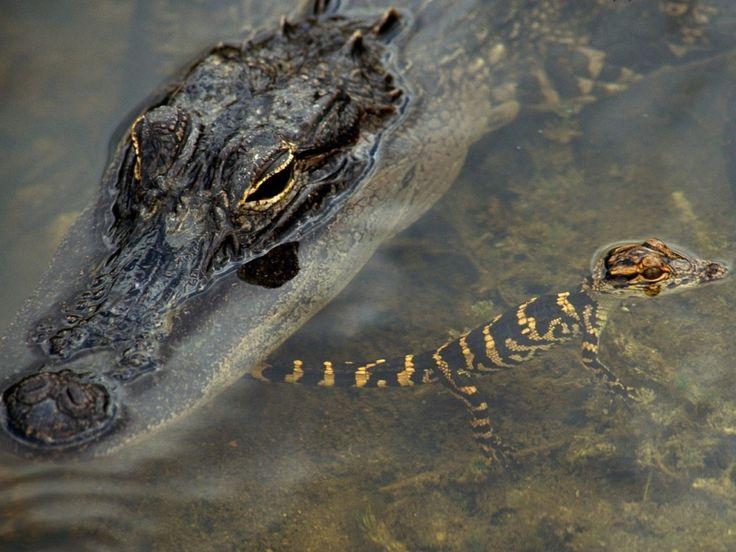 fondos de escritorio reptiles