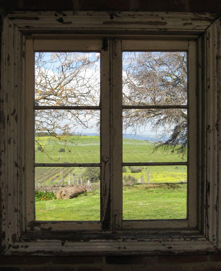 Vines through the window, Coriole, McLaren Vale
