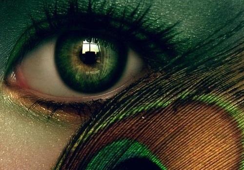 цвета, глаз, тени для век, глаза, перо