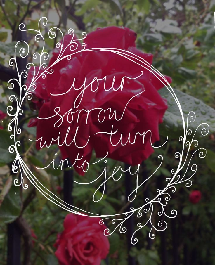 "John 16:20,22 ""your sorrow will turn to joy"" [quote with a red rose bush in the background]"