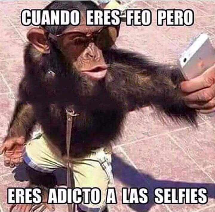 Ms de 25 ideas increbles sobre Memes de monos en Pinterest