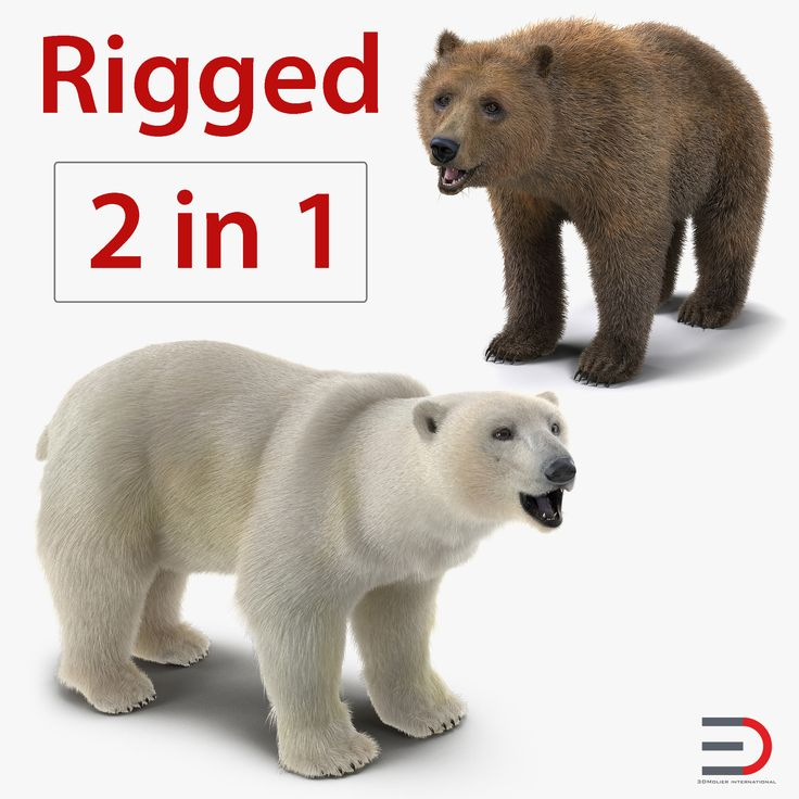 Brown and Polar Bears Rigged Collection 3D