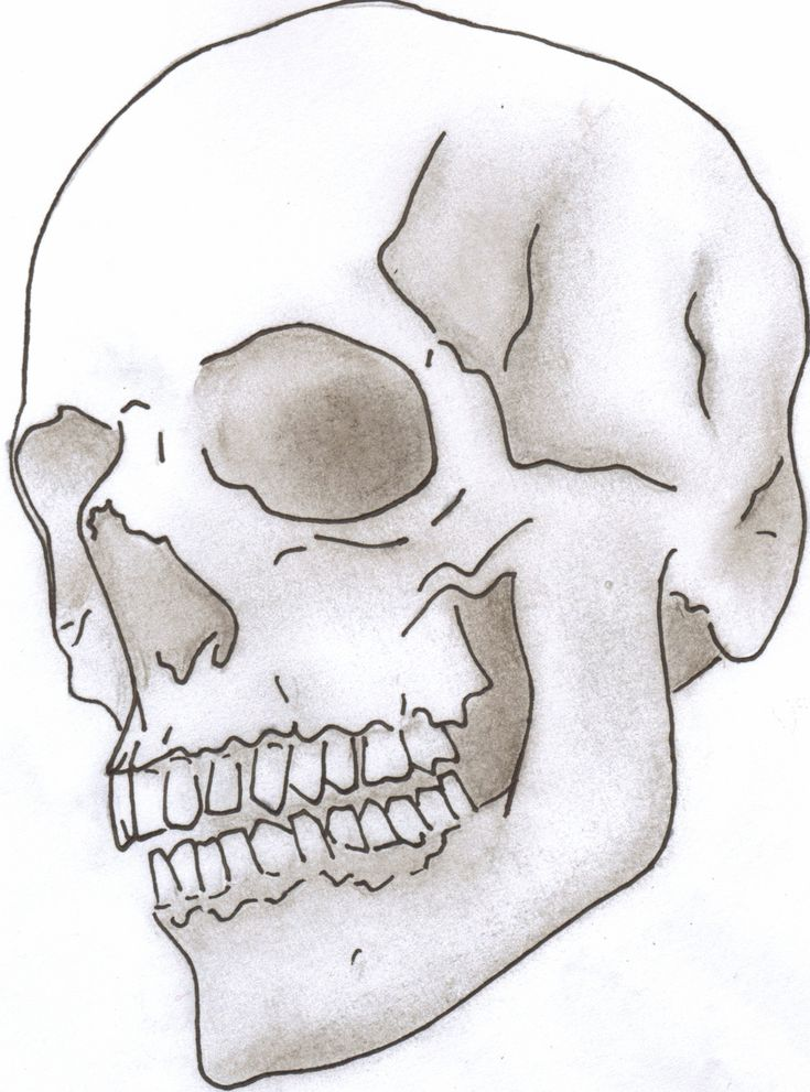 Line Art Skull : Skull drawing google search things