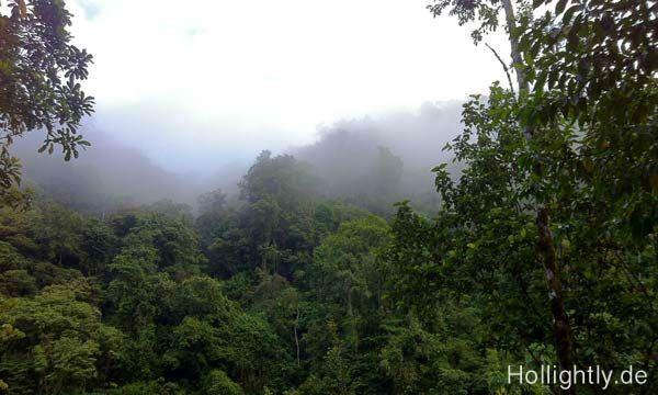 Jungle Fever in Costa Rica