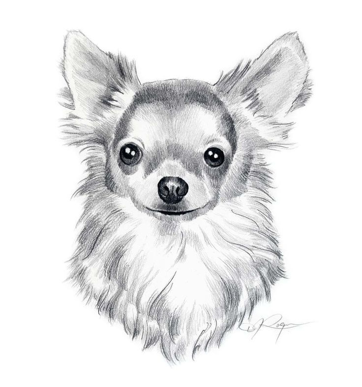 1210 best Dog Art images on Pinterest | Doggies, Chihuahua and ...