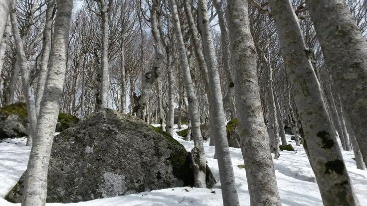 Monte Amiata - Montagna