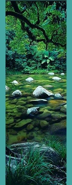 Pristine Waters by Peter Lik - Mossman Gorge - North Cairns, Australia