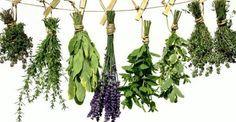 Υγεία - Μάθε τίς θεραπευτικές ιδιότητες κάθε βοτάνου μέσα από έναν εύχρηστο αλφαβητικό κατάλογο των βοτάνων της ελληνικής φύσης! Α Αγγελική – για τόνωση, φλέγμα, σ