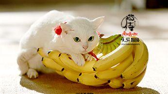 壁紙ダウンロード|『猫侍 SEASON2』