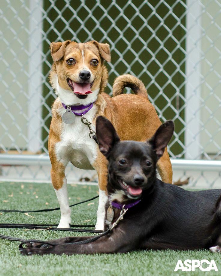 Aspca Dog Training Classes