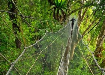2 Days 1 Night Kinabalu Park & Poring Hot Spring & Sabah Tea Garden Tour