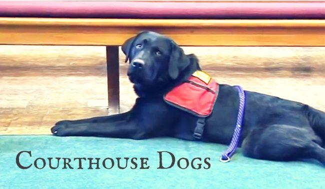 広がる介助犬活躍の場大丈夫落ち着いて裁判所で証言者を支えるワンコ米国の事例