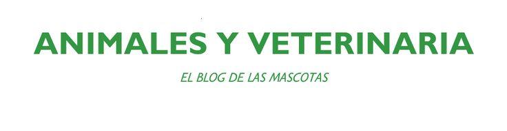 Sociedad para la Conservación de los Animales feos   Blog de Veterinaria y Cuidado de Animales – Campus Training