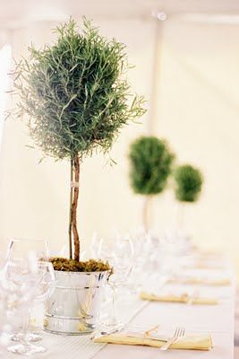 rosemary topiaries; would love to see if I could do this for in my kitchen
