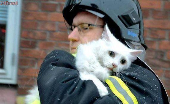 Série de fotos emocionantes mostram bombeiros resgatando animais