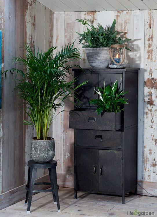Urban jungle met luchtzuiverende planten