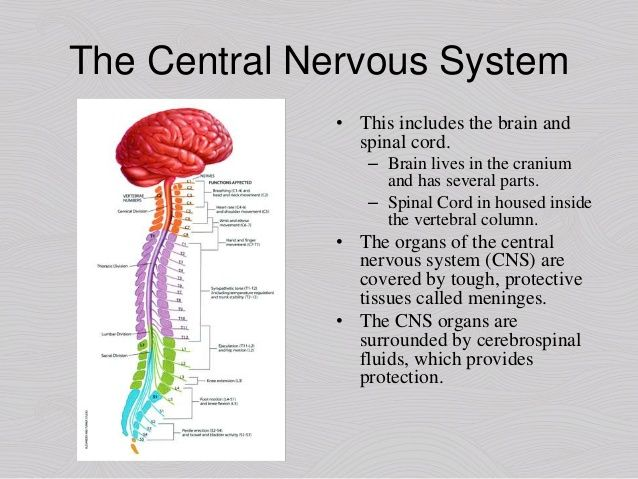 psy 240 week 2 appendix b the nervous system Axia college material appendix b structures of the nervous system this activity will increase your understanding of the different structures of as you conduct the structures of the nervous system activity, follow along with this word document and fill in the descriptions of those terms you used to.