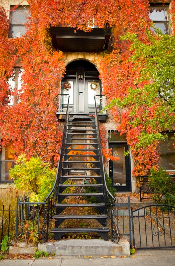 October vines cover a house (Montreal, Quebec) by Jonathan Clark