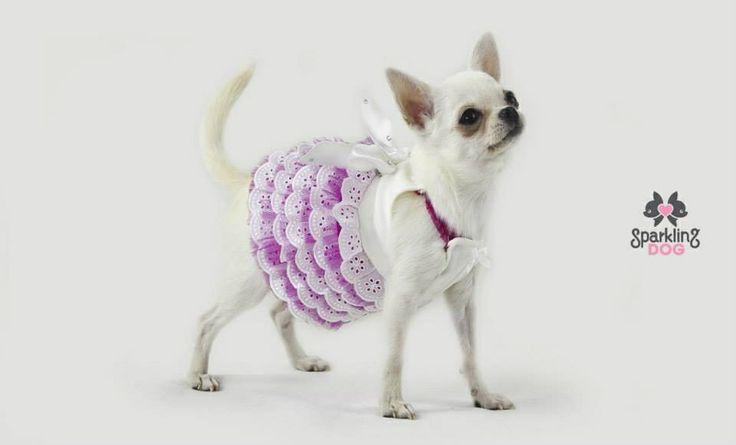 Info: bau@sparklingdog.it ✉️