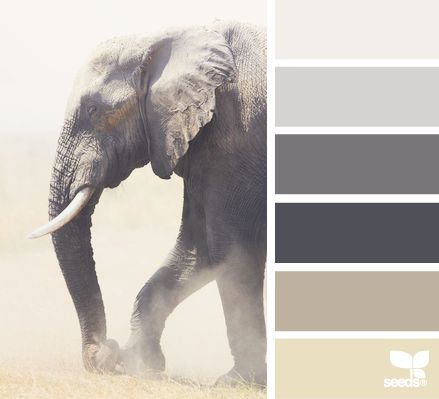Design Seeds® | for all who ❤ color | elephant tones