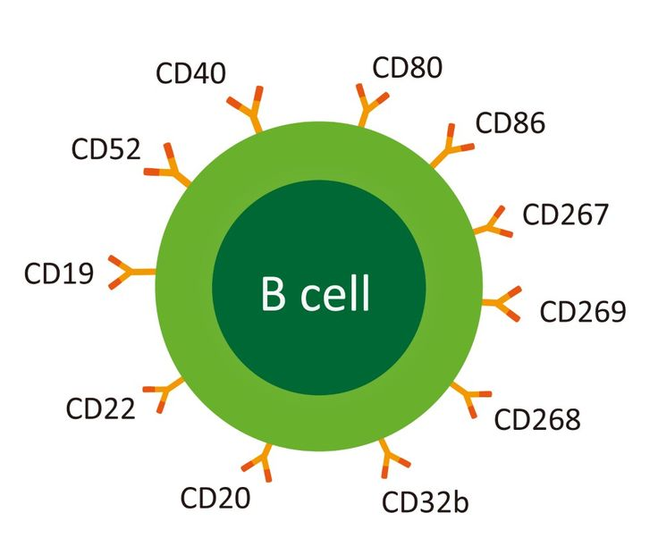 How does Cladribine Work. It kills B cells   David BakerSamuel S. HerrodCesar Alvarez-GonzalezLukasz ZalewskiChristo Albor and Klaus Schmierer. Both cladribine and alemtuzumab may effect MS via B-cell depletion  Neurology Neuroimmunology Neurosurgery. http://dx.doi.org/10.1212/NXI.0000000000000360Objective: To understand the efficacy of cladribine (CLAD) treatment in MS through analysis of lymphocyte subsets collected but not reported in the pivotal phase III trials of cladribine and…