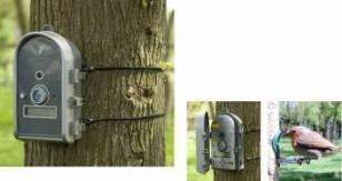 5mp Birdcam - Motion Active | Gardenature