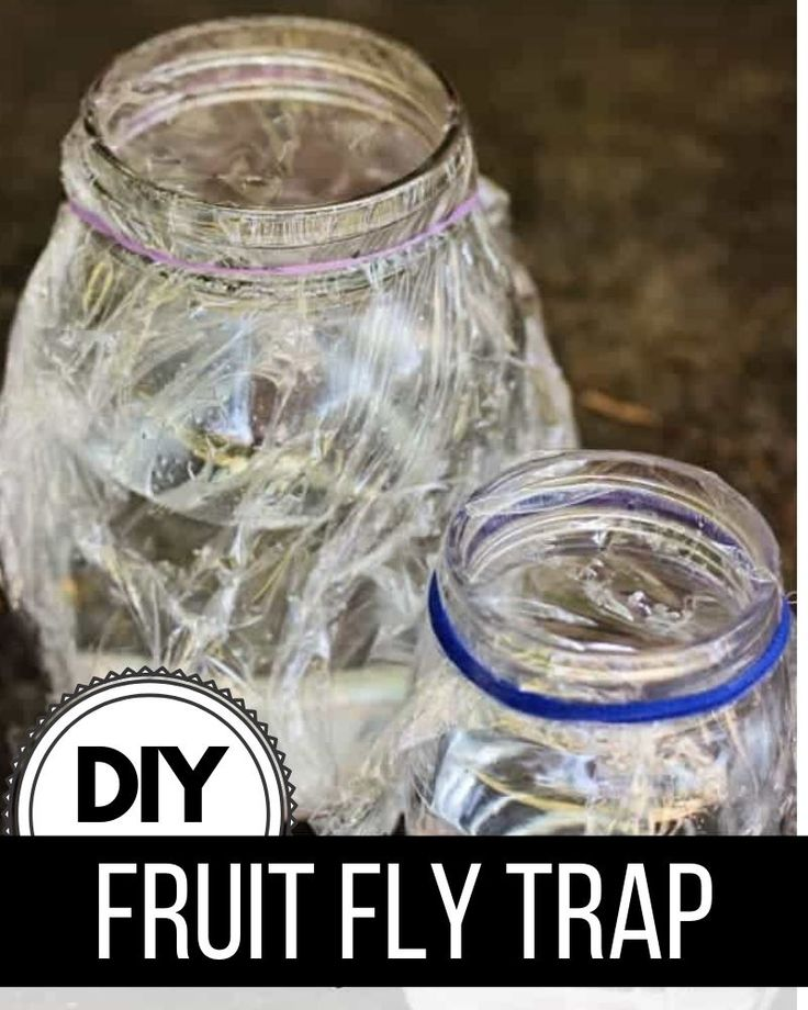 Gnats in the house? Make this DIY fruit fly trap to catch ...