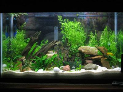 20 best images about aquarium set up ideas on pinterest for Freshwater fish tank setup