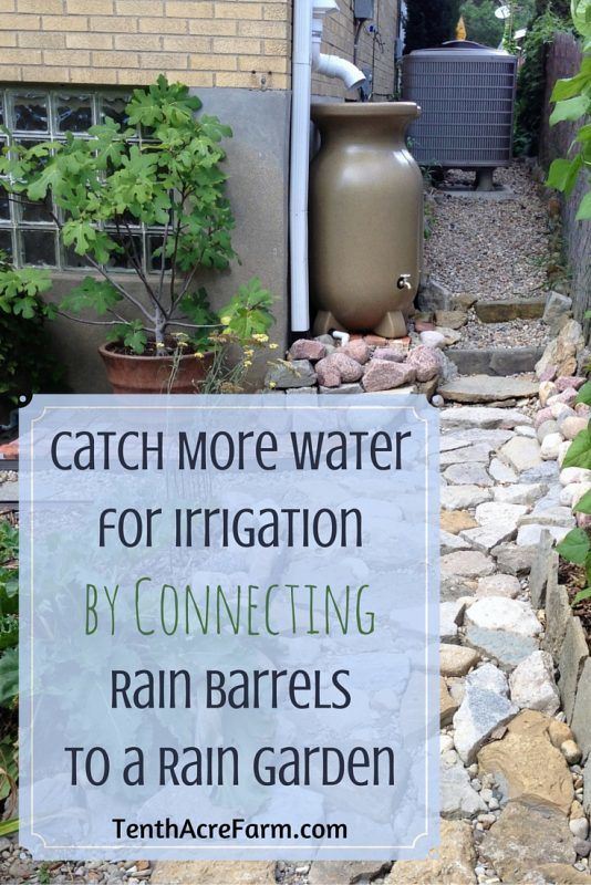 Collecting rain from your roof in rain barrels is a great way to use a free resource to irrigate the garden. However, rain barrels can fill up within minutes during a rain event. Directing rain barrel overflow into a rain garden is one way to keep more water on your property for irrigation or to create more biodiversity.