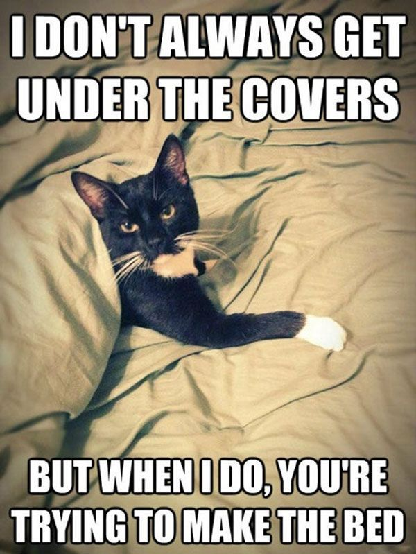 My cat always does this. We have to play tag under the covers or he just sits in the bed and glares death at me.