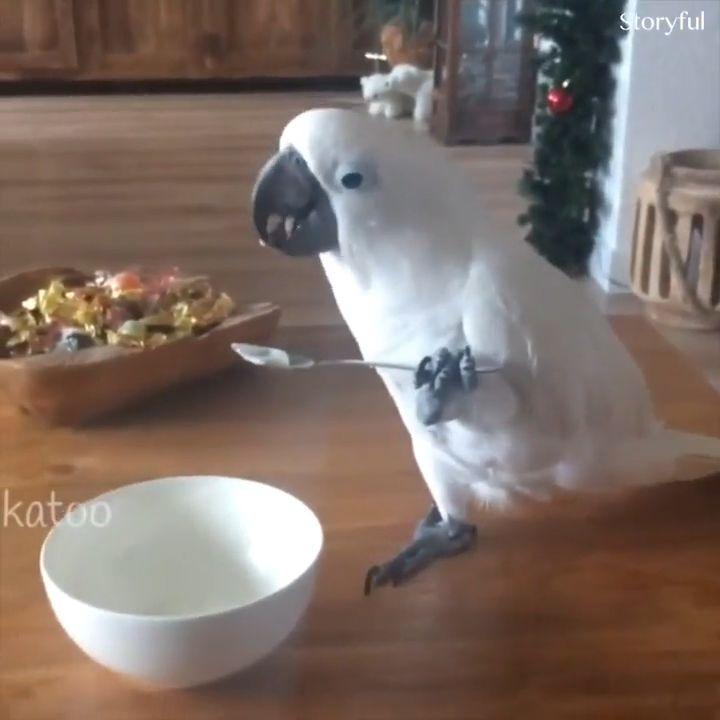 Some Animals are so intelligent
