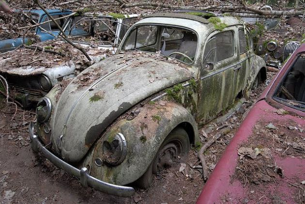 Until 2009, Kaufdorf vehicle graveyard in Switzerland was a junkyard housing the shells of hundreds of abandoned cars and motorbikes, many of them VW Beetles