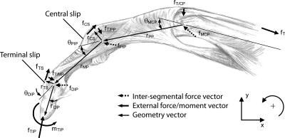 17 best images about sdp tendons and forces on pinterest
